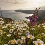 Images For Visit Guernsey – Shot 2012