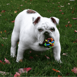 Fun Tech Gadgets For Your Dogs